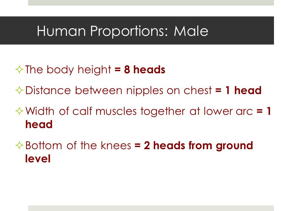 Human Proportions: Male  The body height = 8 heads  Distance between nipples on chest = 1 head  Width of calf muscles together at lower arc = 1 head  Bottom of the knees = 2 heads from ground level