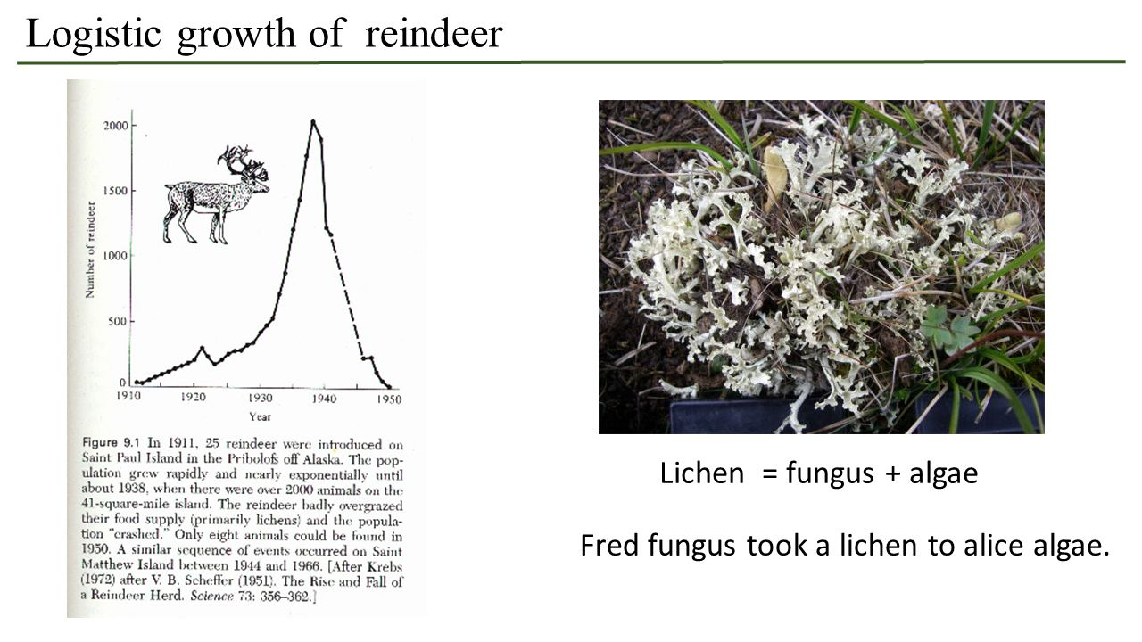 Logistic growth of reindeer Lichen = fungus + algae Fred fungus took a lichen to alice algae.