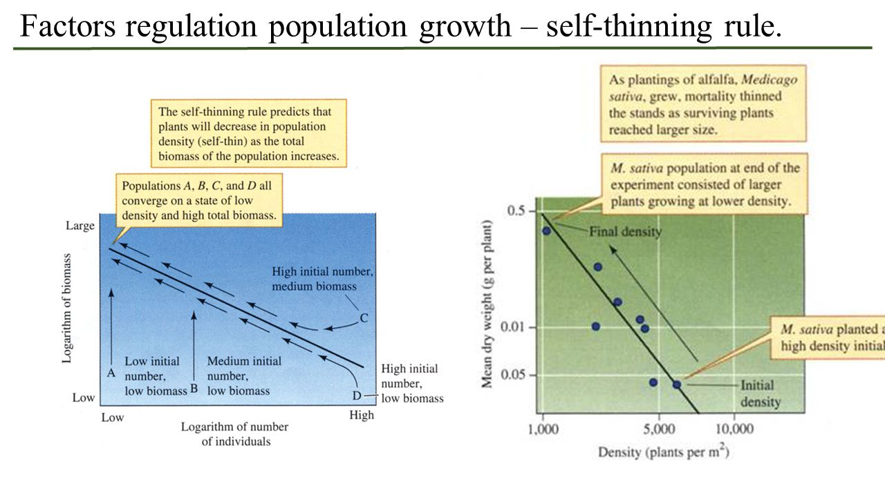 Factors regulation population growth – self-thinning rule.