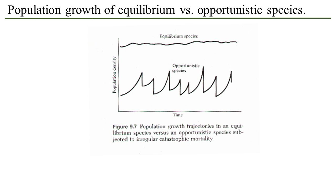 Population growth of equilibrium vs. opportunistic species.