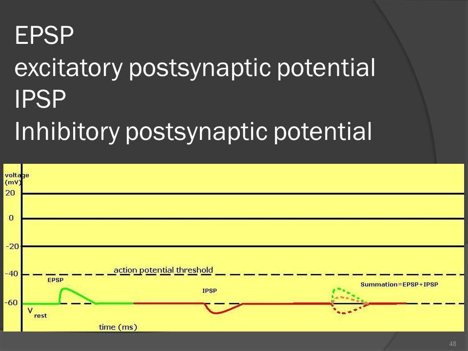 EPSP excitatory postsynaptic potential IPSP Inhibitory postsynaptic potential 48