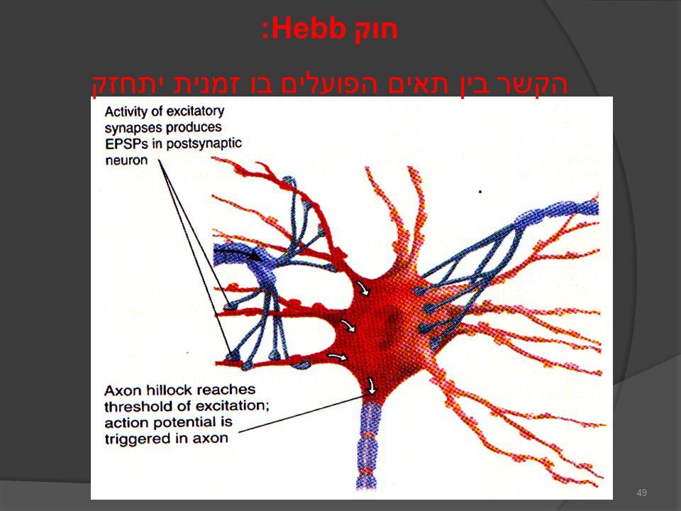 חוק Hebb: הקשר בין תאים הפועלים בו זמנית יתחזק 49