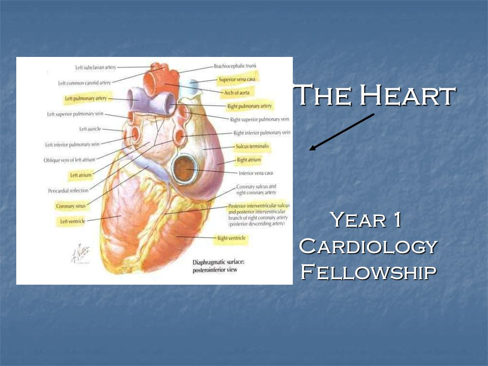 Right heart catheterization and the Swan Ganz catheter The first to demonstrate that a catheter could be advanced safely into the human heart was the German surgeon Werner Forssmann (1904-1979) – who did the experiment on himself.