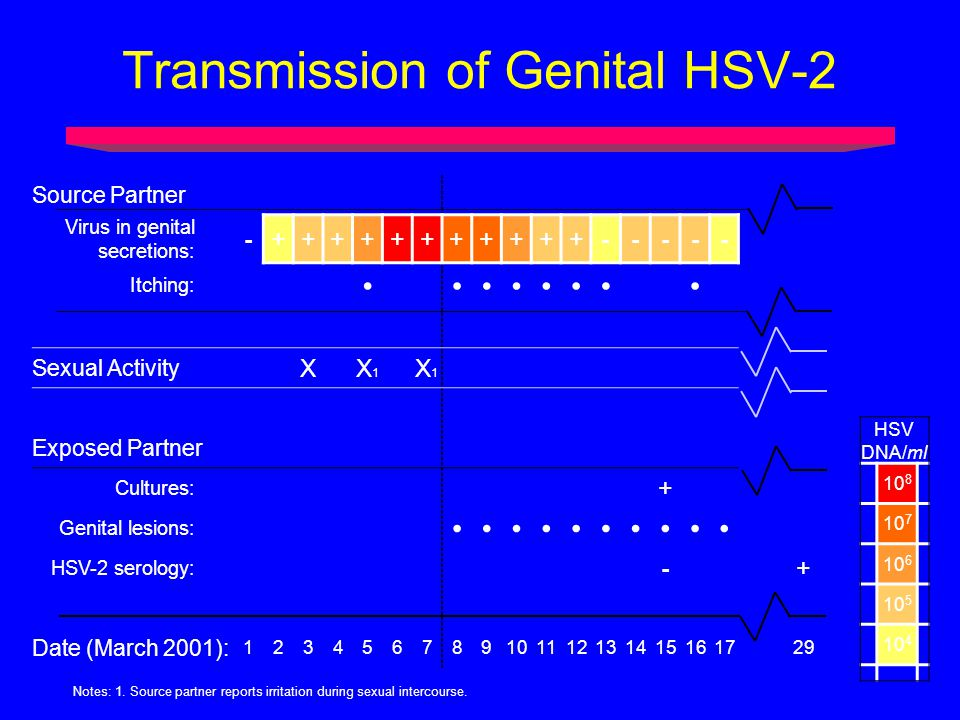 Transmission of Genital HSV-2 Source Partner Virus in genital secretions: -+++++++++++----- Itching: Sexual Activity XX1X1 X1X1 Exposed Partner Cultures: + Genital lesions: HSV-2 serology: -+ Date (March 2001): 123456789101112131415161729 Notes: 1.