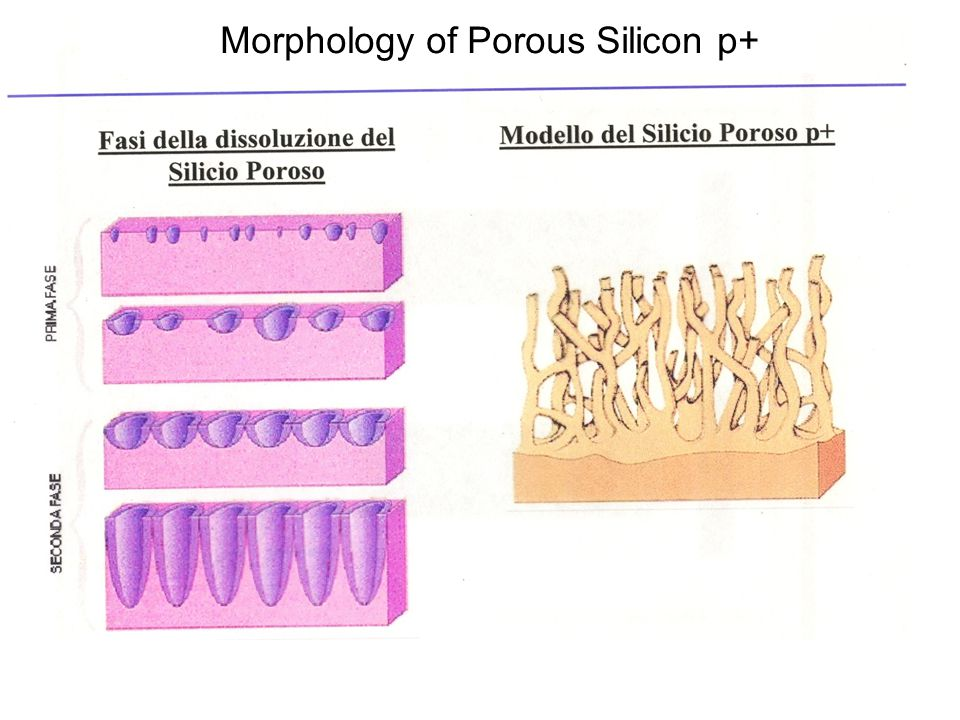 Morphology of Porous Silicon p+