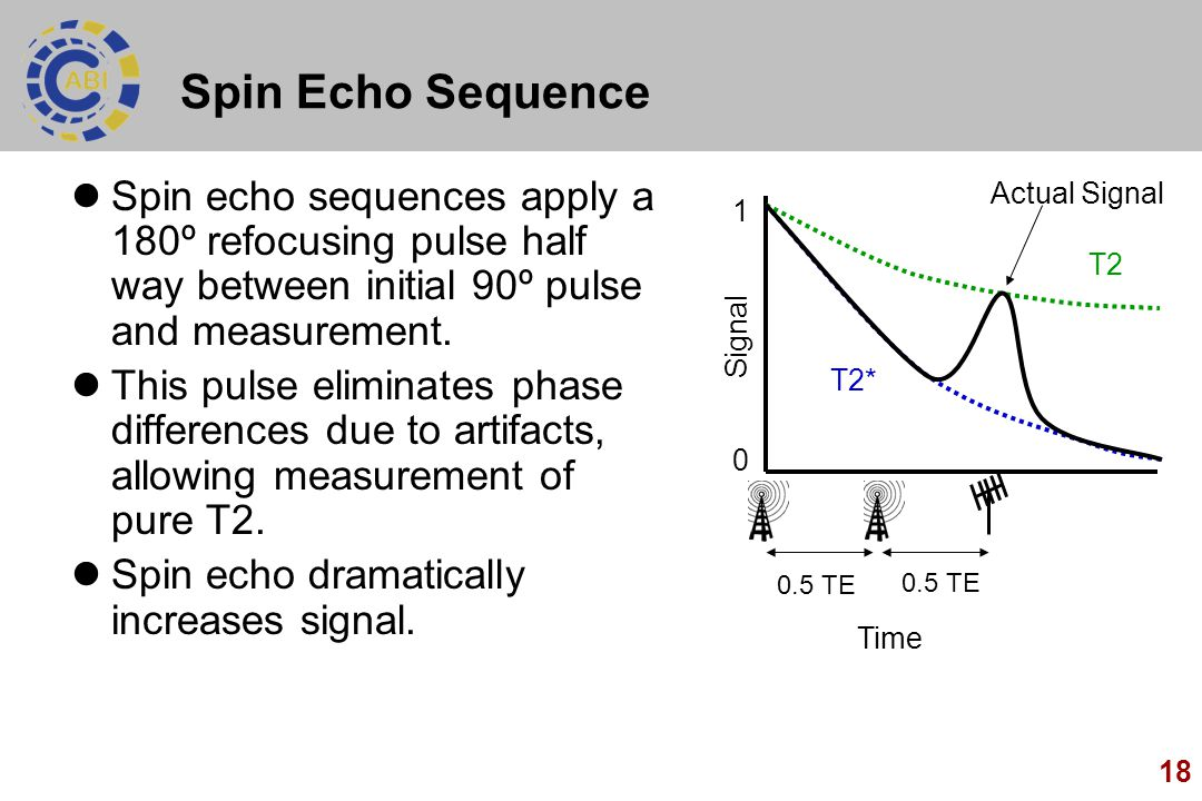 18 Spin Echo Sequence Spin echo sequences apply a 180º refocusing pulse half way between initial 90º pulse and measurement. This pulse eliminates phas