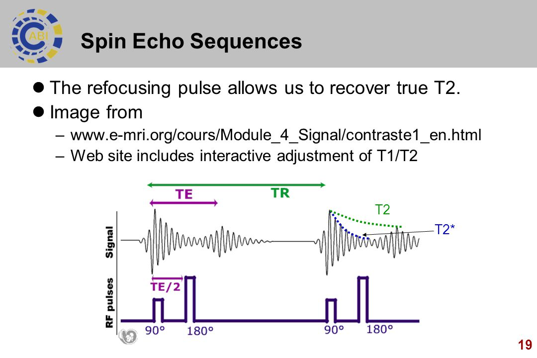19 Spin Echo Sequences The refocusing pulse allows us to recover true T2. Image from –www.e-mri.org/cours/Module_4_Signal/contraste1_en.html –Web site