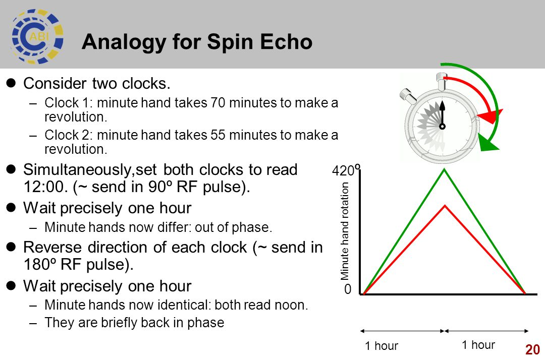 20 Analogy for Spin Echo Consider two clocks. –Clock 1: minute hand takes 70 minutes to make a revolution. –Clock 2: minute hand takes 55 minutes to m