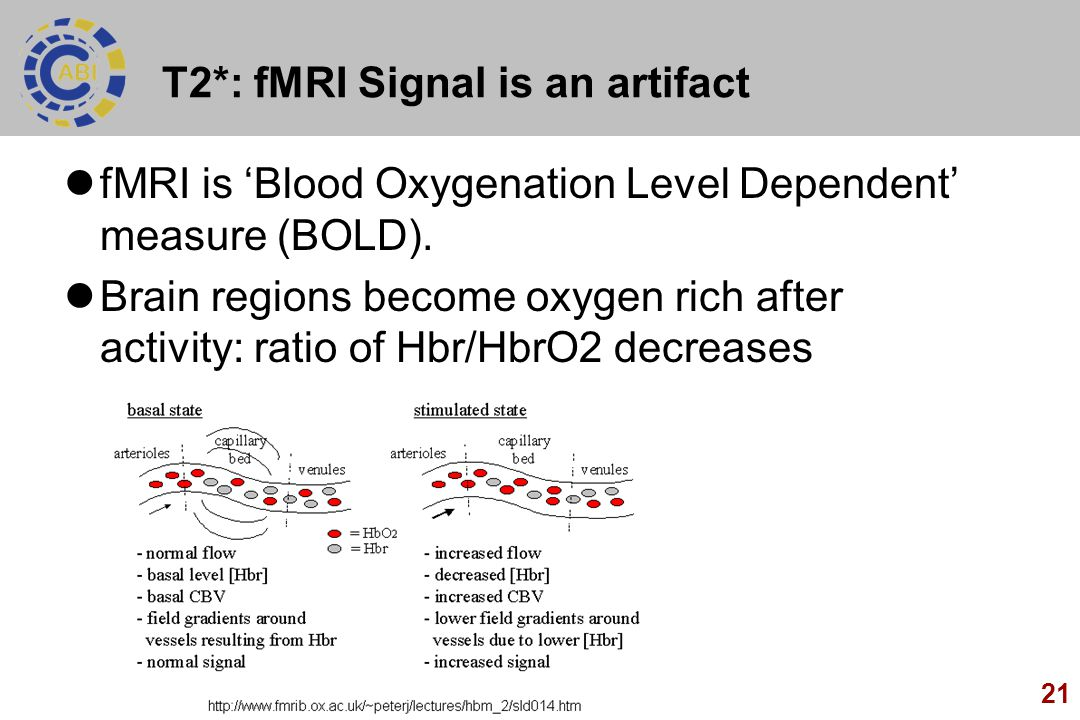 21 T2*: fMRI Signal is an artifact fMRI is 'Blood Oxygenation Level Dependent' measure (BOLD). Brain regions become oxygen rich after activity: ratio