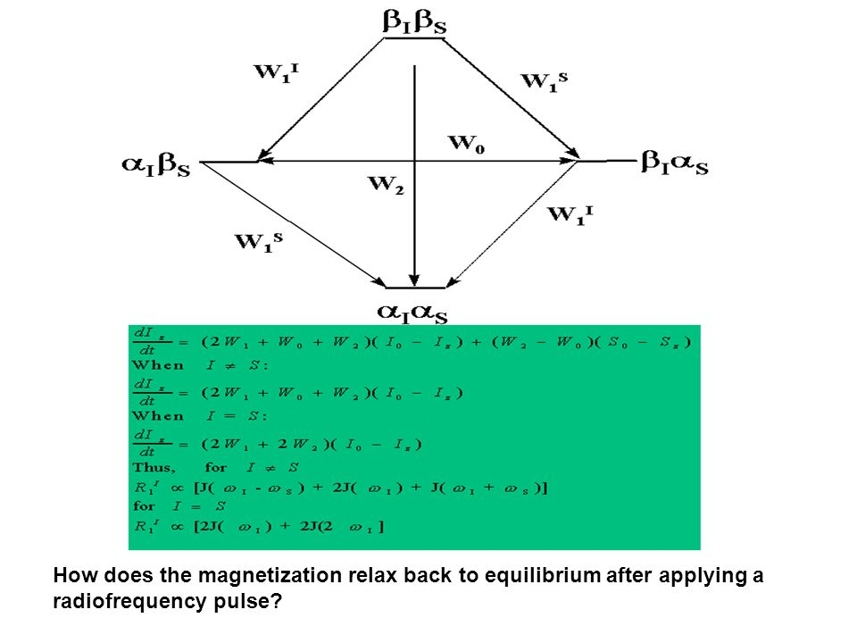 How does the magnetization relax back to equilibrium after applying a radiofrequency pulse