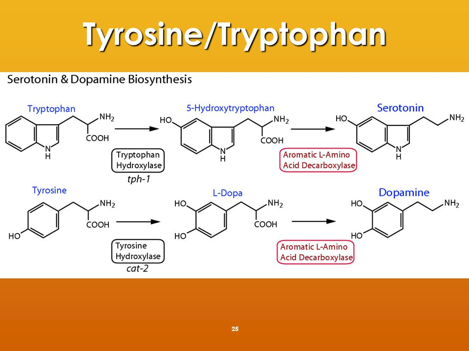 Further tyrosine metabolism 26