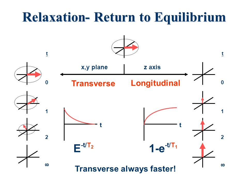 Spin-spin relaxation (Transverse) T 2  T 2 represents the lifetime of the signal in the transverse plane (XY plane)  T 2 is the relaxation time that is responsible for the line width.