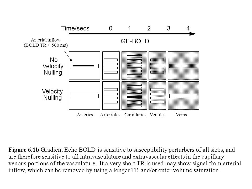 GE-BOLD No Velocity Nulling Velocity Nulling Figure 6.1b Gradient Echo BOLD is sensitive to susceptibility perturbers of all sizes, and are therefore