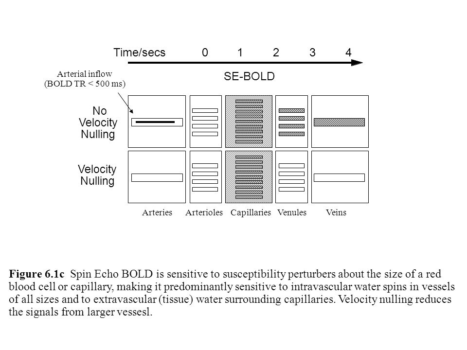 SE-BOLD No Velocity Nulling Velocity Nulling Figure 6.1c Spin Echo BOLD is sensitive to susceptibility perturbers about the size of a red blood cell o