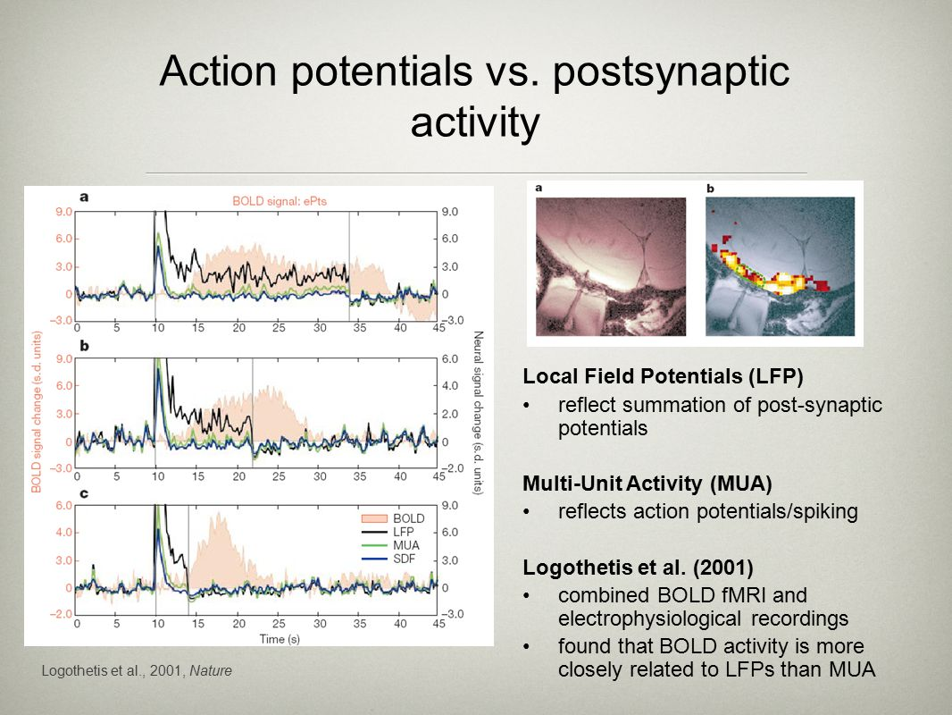 Logothetis et al., 2001, Nature Action potentials vs.