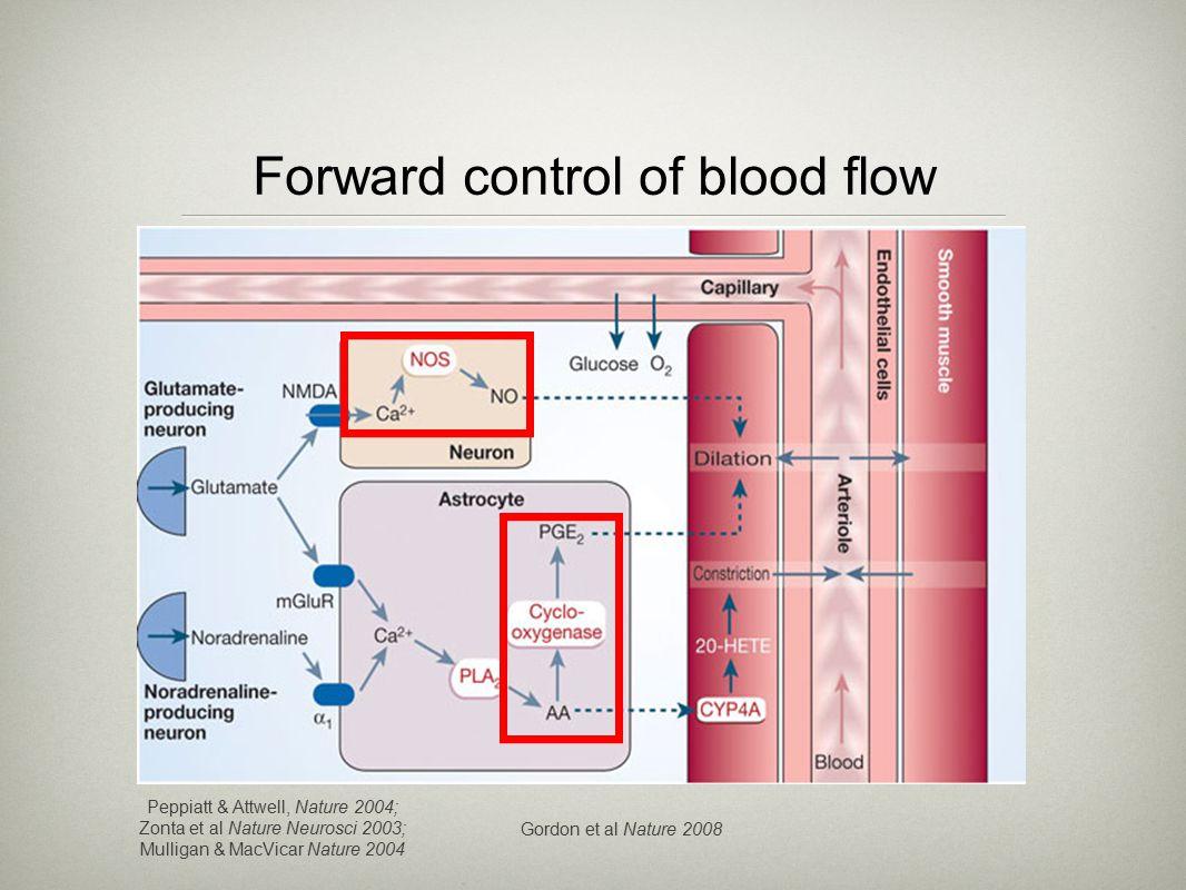 Forward control of blood flow Peppiatt & Attwell, Nature 2004; Zonta et al Nature Neurosci 2003; Mulligan & MacVicar Nature 2004 Gordon et al Nature 2008