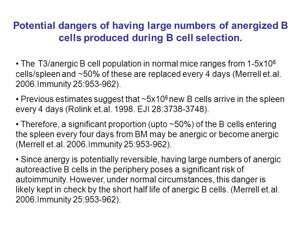 Potential dangers of having large numbers of anergized B cells produced during B cell selection. The T3/anergic B cell population in normal mice range