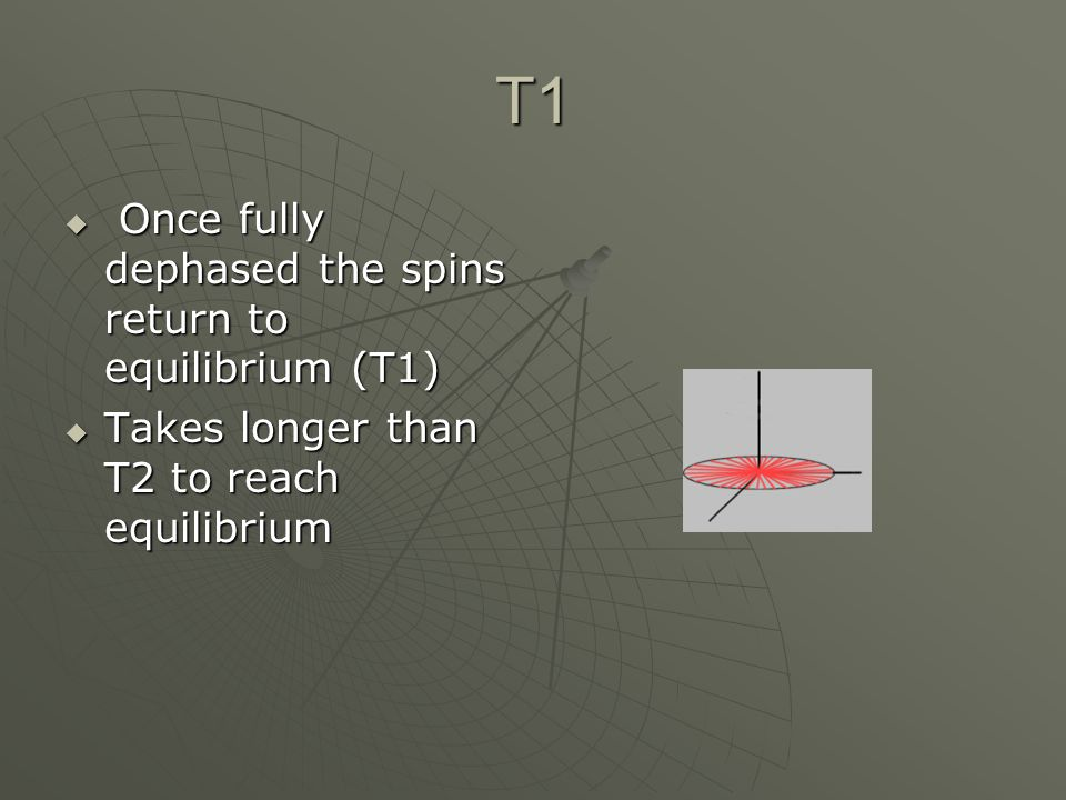 T1  Once fully dephased the spins return to equilibrium (T1)  Takes longer than T2 to reach equilibrium
