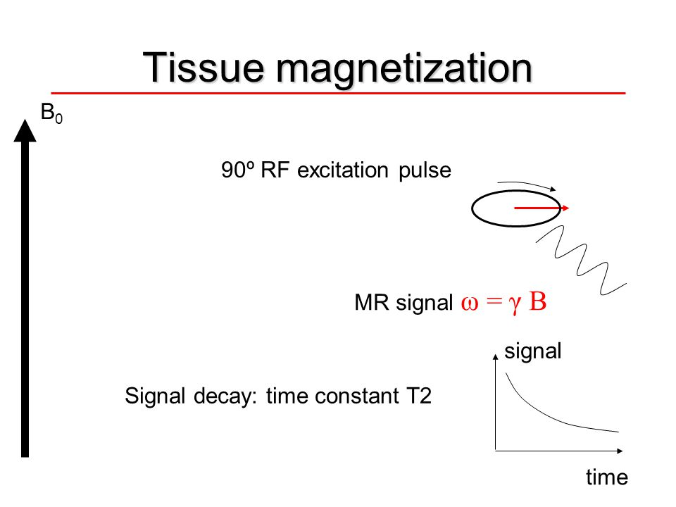 Tissue magnetization B0B0 90º RF excitation pulse MR signal ω = γ B Signal decay: time constant T2 signal time