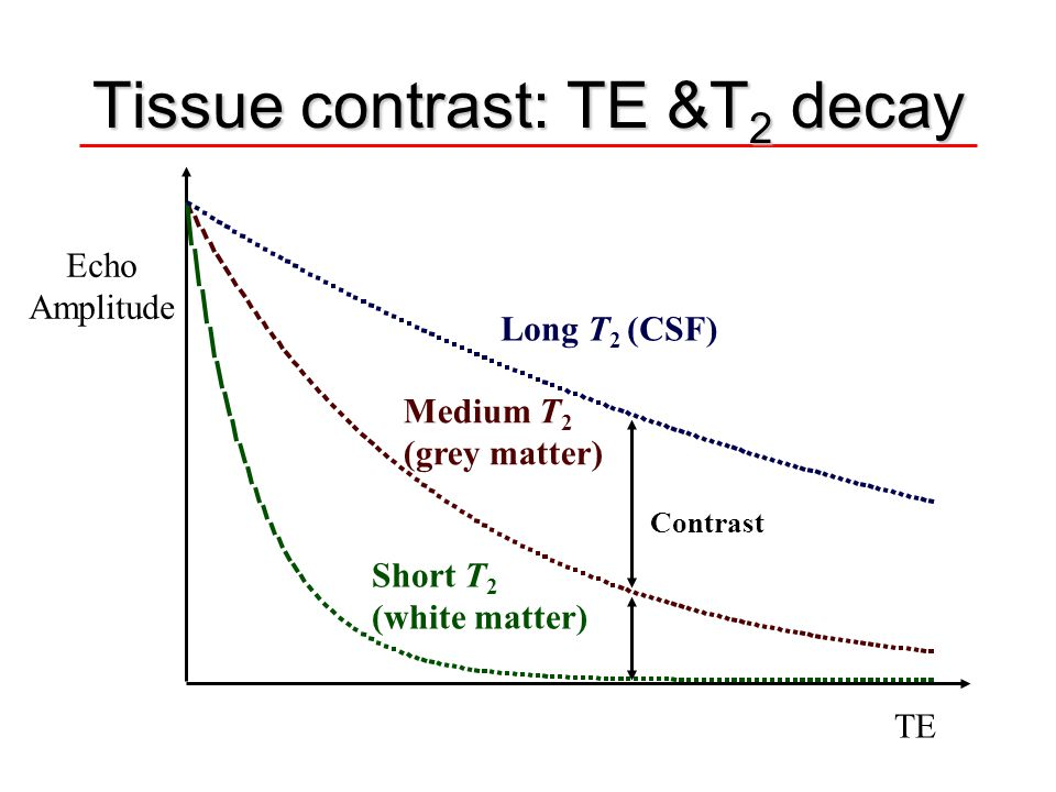Tissue contrast: TE &T 2 decay TE Echo Amplitude Long T 2 (CSF) Medium T 2 (grey matter) Short T 2 (white matter) Contrast