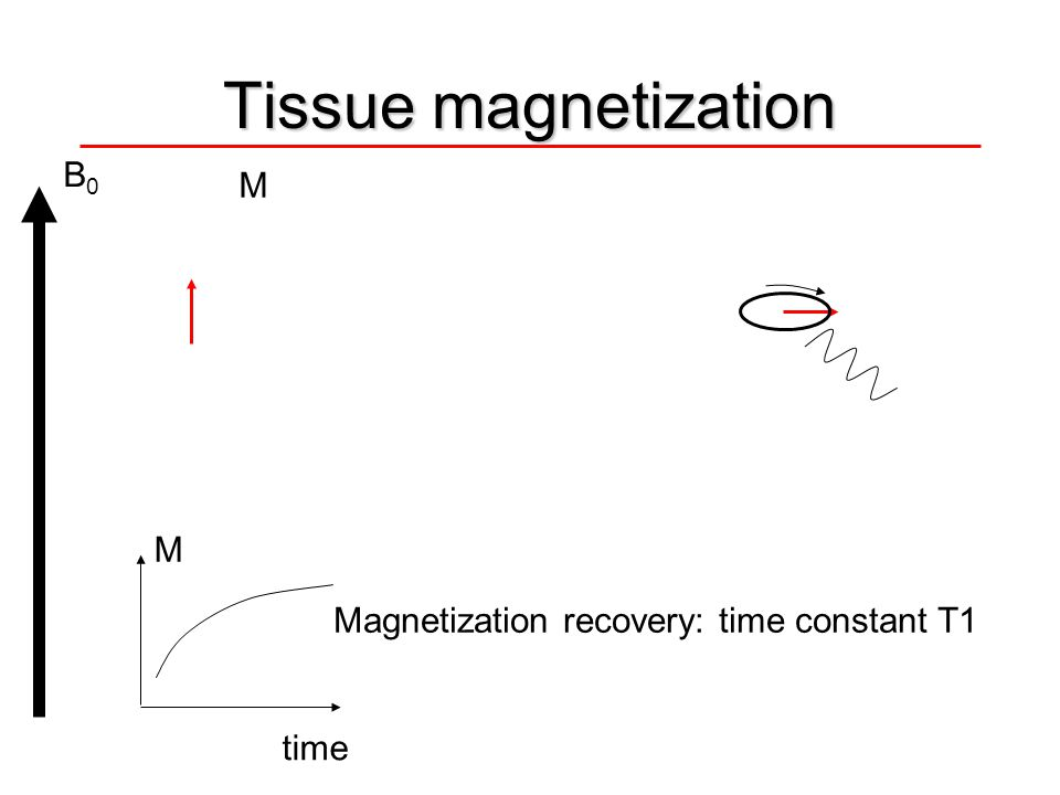 Tissue magnetization B0B0 M Magnetization recovery: time constant T1 M time