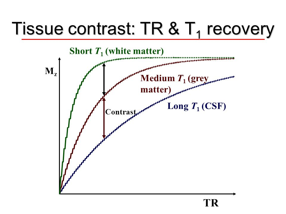 Tissue contrast: TR & T 1 recovery TR Medium T 1 (grey matter) Long T 1 (CSF) Short T 1 (white matter) MzMz Contrast