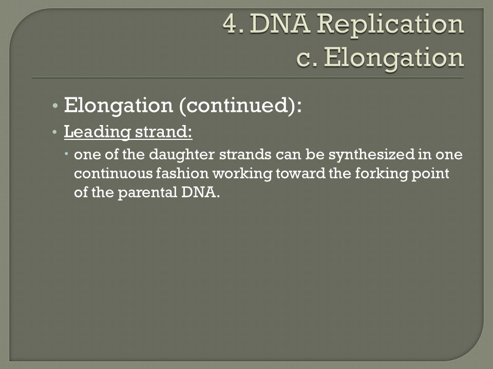 Elongation (continued): Leading strand:  one of the daughter strands can be synthesized in one continuous fashion working toward the forking point of