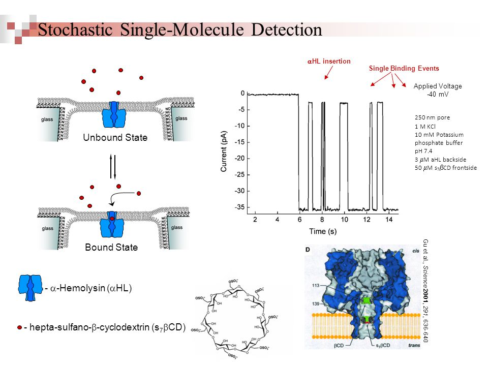 Stochastic Single-Molecule Detection - hepta-sulfano-  -cyclodextrin (s 7  CD) R = -OSO 3 - Bound State Unbound State -  -Hemolysin (  HL)  HL insertion Single Binding Events Applied Voltage -40 mV Gu et al., Science 2001, 291, 636-640 1 M KCl 10 mM Potassium phosphate buffer pH 7.4 3  M aHL backside 50  M s 7  CD frontside 250 nm pore