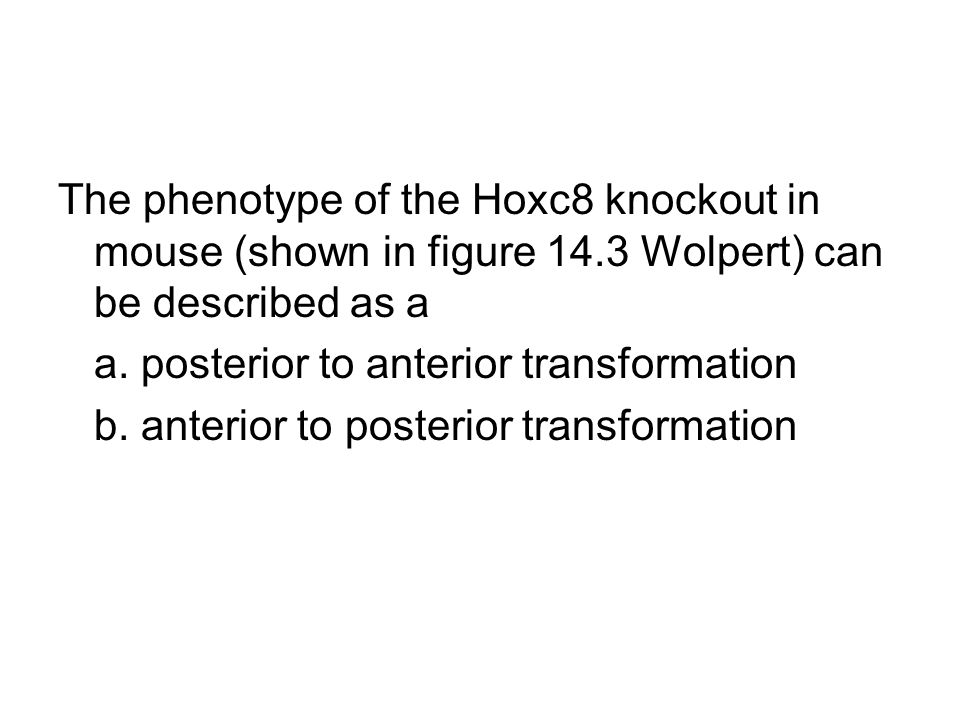 The phenotype of the Hoxc8 knockout in mouse (shown in figure 14.3 Wolpert) can be described as a a. posterior to anterior transformation b. anterior