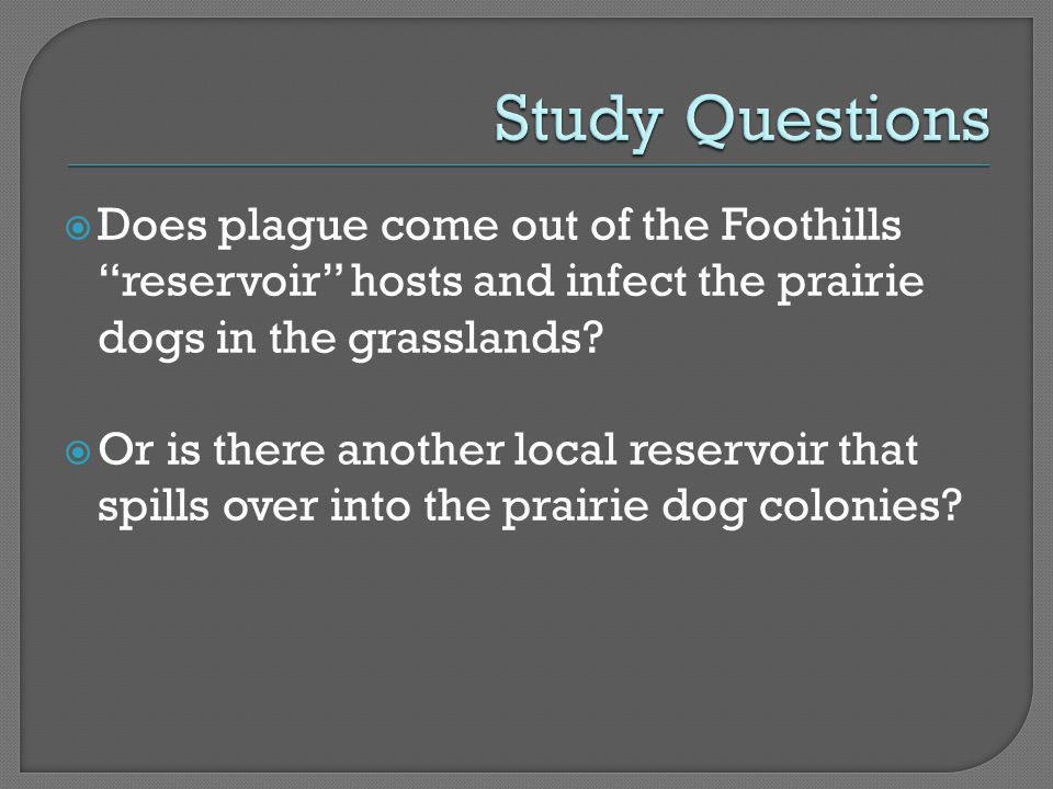 " Does plague come out of the Foothills ""reservoir"" hosts and infect the prairie dogs in the grasslands?  Or is there another local reservoir that sp"