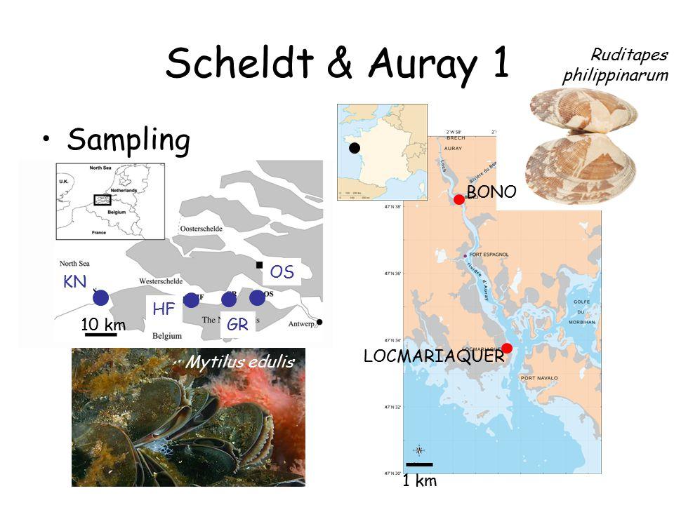Scheldt & Auray 1 Sampling LOCMARIAQUER BONO 1 km 10 km KN HF GR OS Mytilus edulis Ruditapes philippinarum