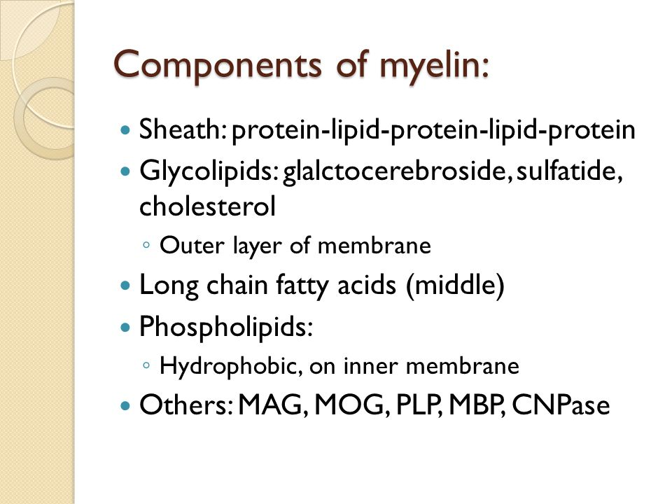Components of myelin: Sheath: protein-lipid-protein-lipid-protein Glycolipids: glalctocerebroside, sulfatide, cholesterol ◦ Outer layer of membrane Lo