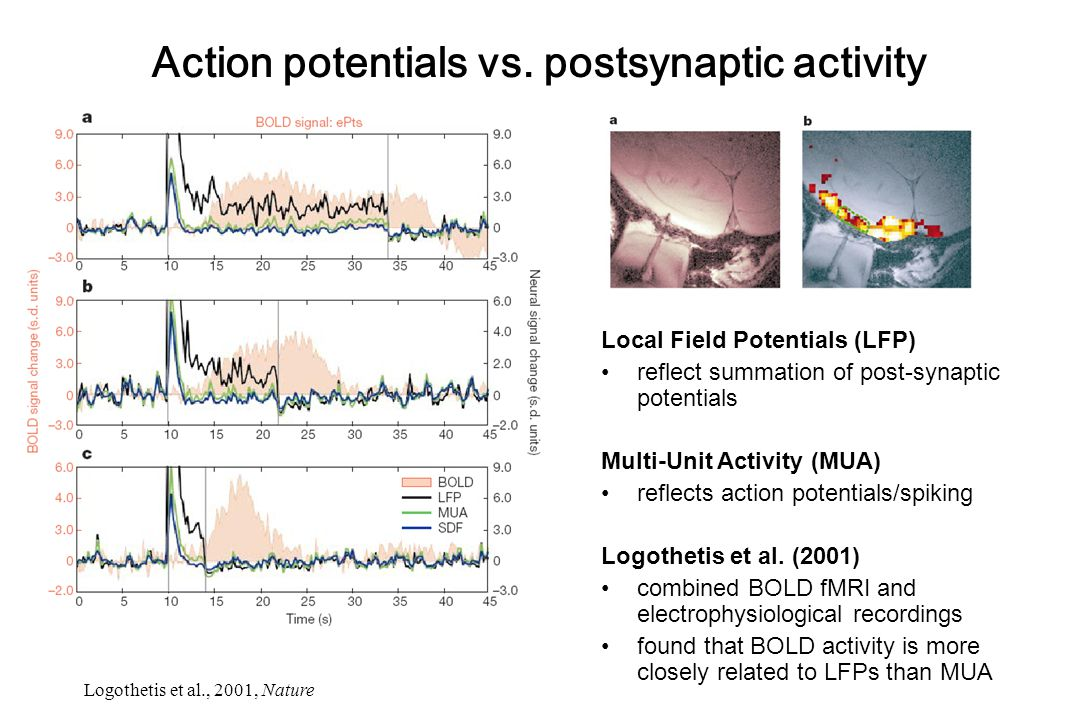 Local Field Potentials (LFP) reflect summation of post-synaptic potentials Multi-Unit Activity (MUA) reflects action potentials/spiking Logothetis et
