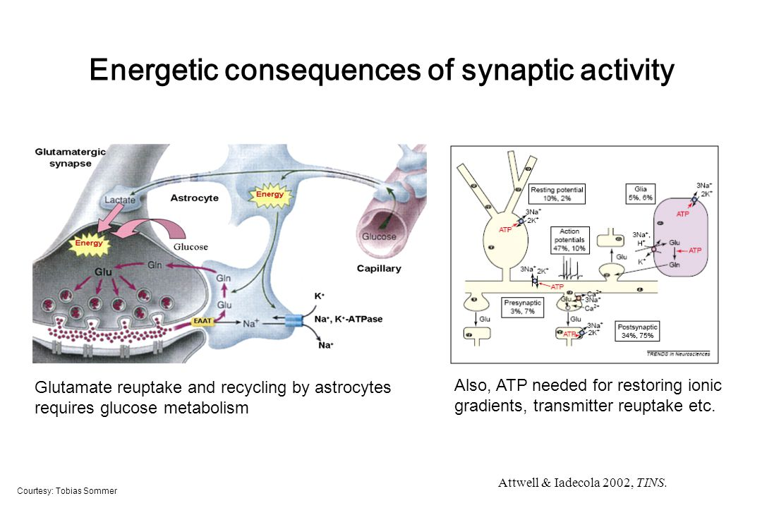 Energetic consequences of synaptic activity Courtesy: Tobias Sommer Glutamate reuptake and recycling by astrocytes requires glucose metabolism Also, ATP needed for restoring ionic gradients, transmitter reuptake etc.