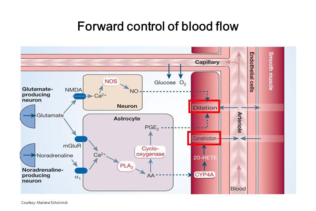 Forward control of blood flow Courtesy: Marieke Scholvinck