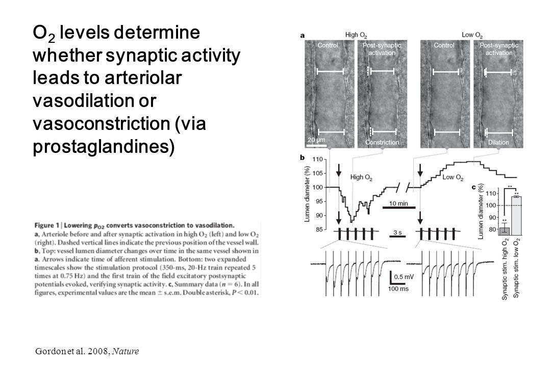 O 2 levels determine whether synaptic activity leads to arteriolar vasodilation or vasoconstriction (via prostaglandines) Gordon et al. 2008, Nature