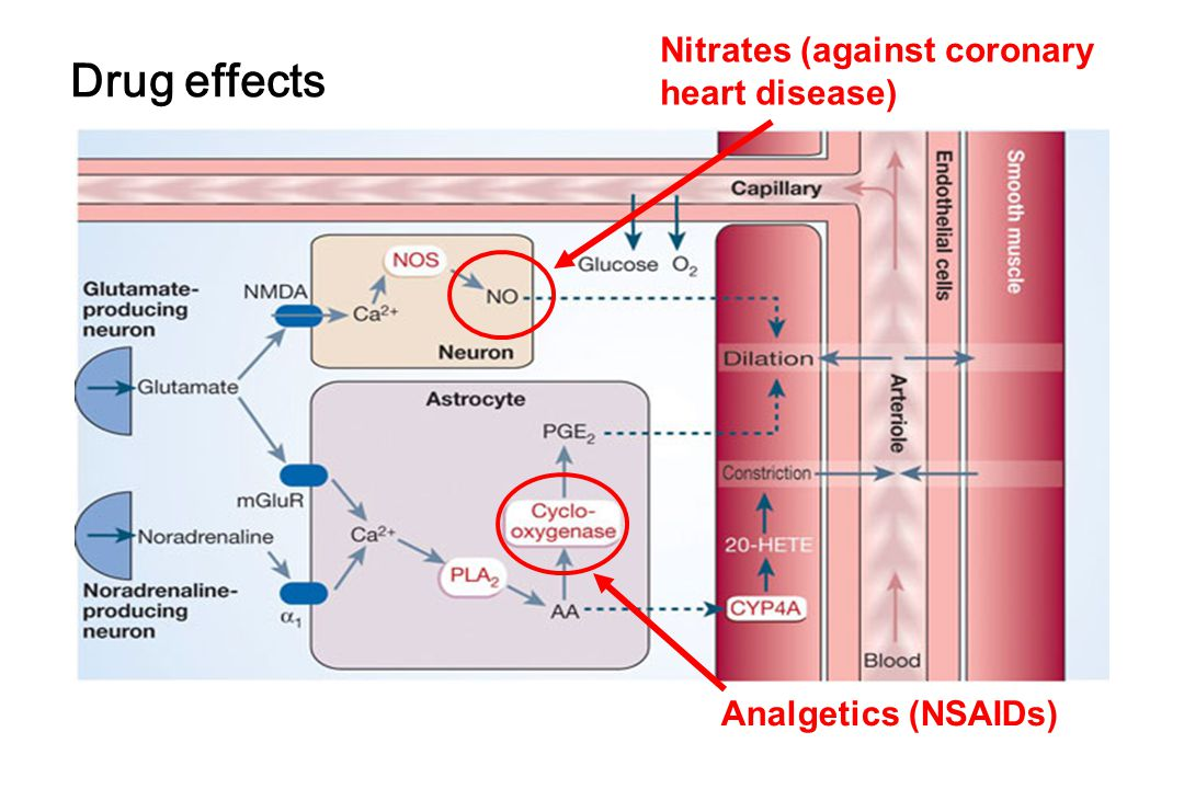 Drug effects Analgetics (NSAIDs) Nitrates (against coronary heart disease)