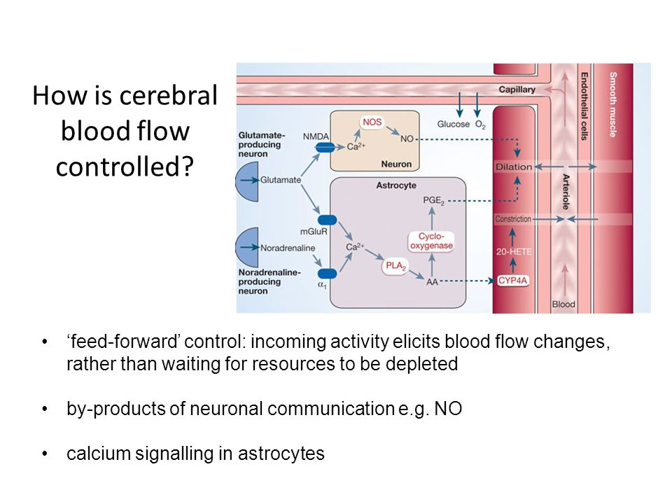 How is cerebral blood flow controlled? 'feed-forward' control: incoming activity elicits blood flow changes, rather than waiting for resources to be d