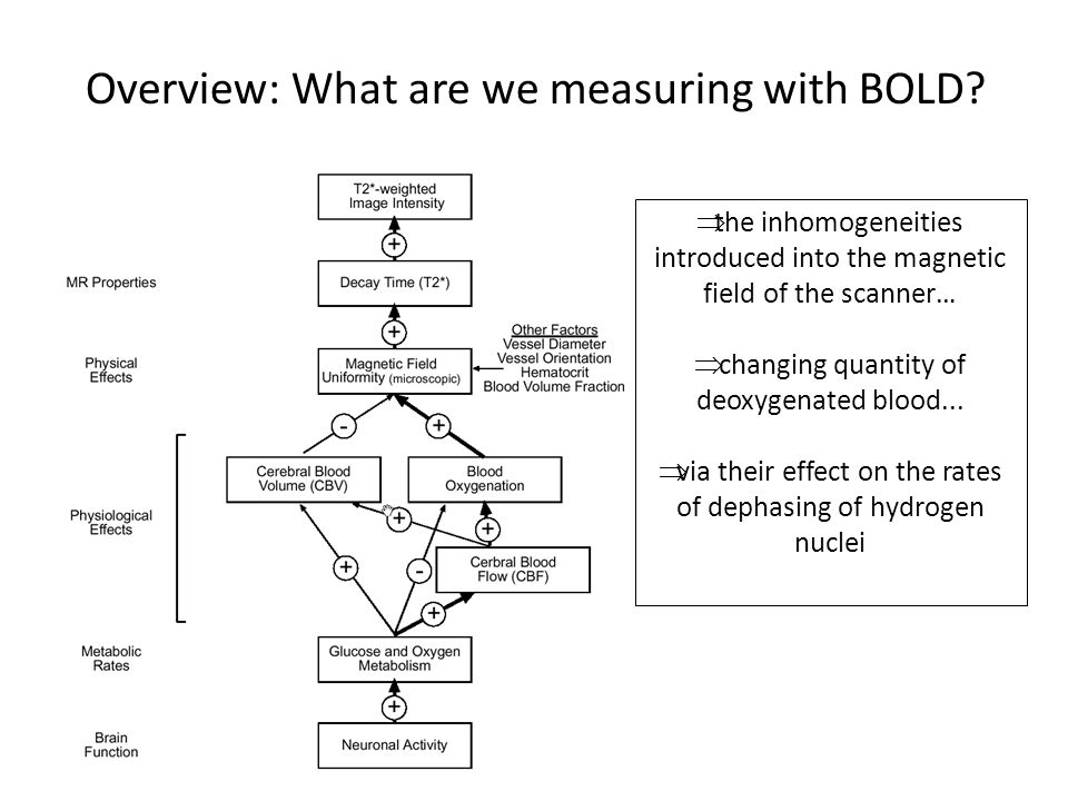 Overview: What are we measuring with BOLD?  the inhomogeneities introduced into the magnetic field of the scanner…  changing quantity of deoxygenate