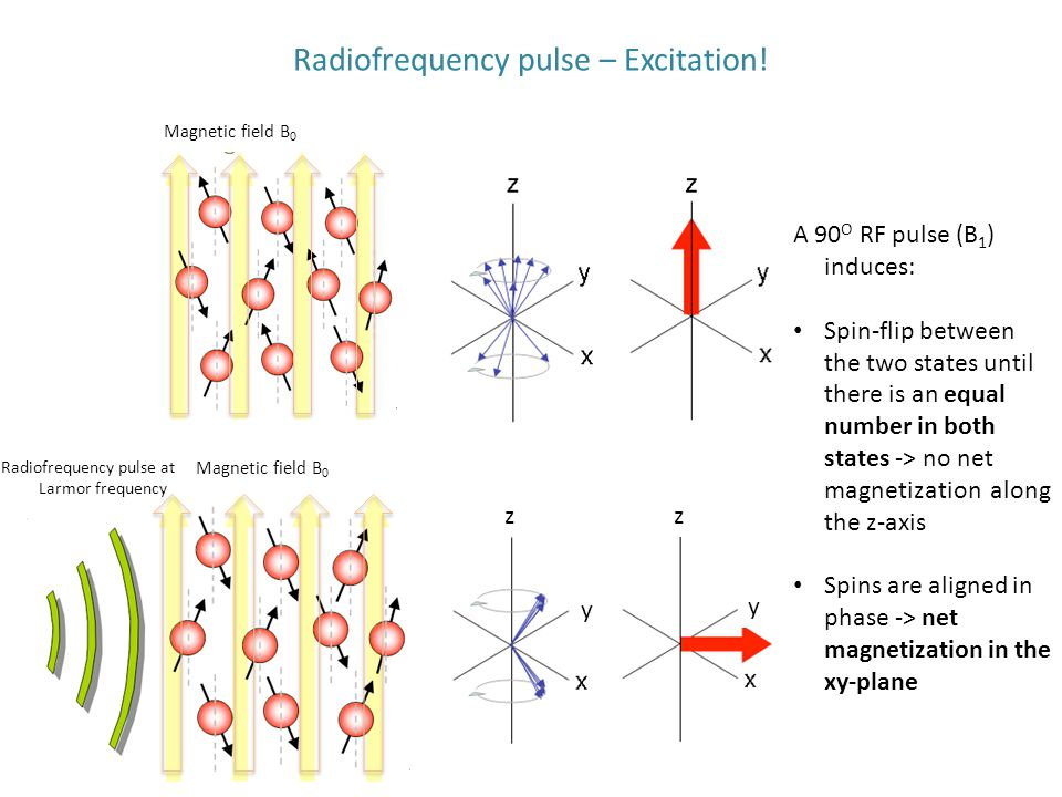 Radiofrequency pulse – Excitation! Magnetic field B 0 Radiofrequency pulse at Larmor frequency Magnetic field B 0 A 90 O RF pulse (B 1 ) induces: Spin