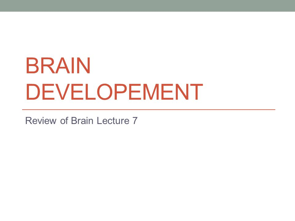 BRAIN DEVELOPEMENT Review of Brain Lecture 7