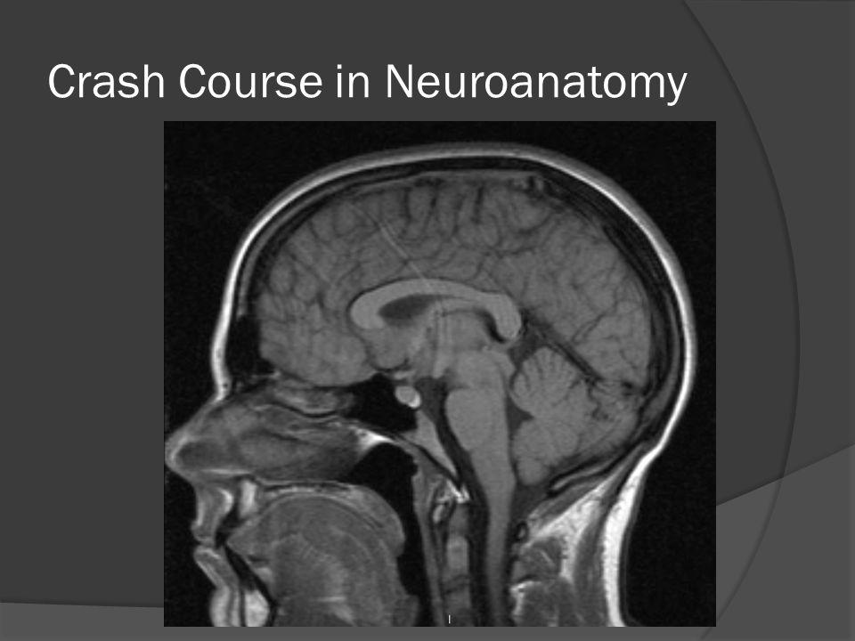 Crash Course in Neuroanatomy