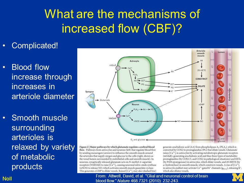 Noll What are the mechanisms of increased flow (CBF)? Complicated! Blood flow increase through increases in arteriole diameter Smooth muscle surroundi