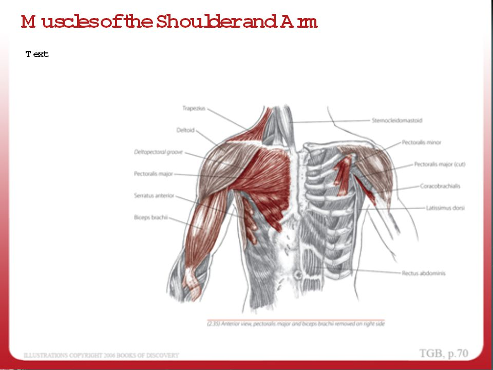 AXIS OF RIB MOTION The other change is the relationship of the axis to the coronal or frontal plane.