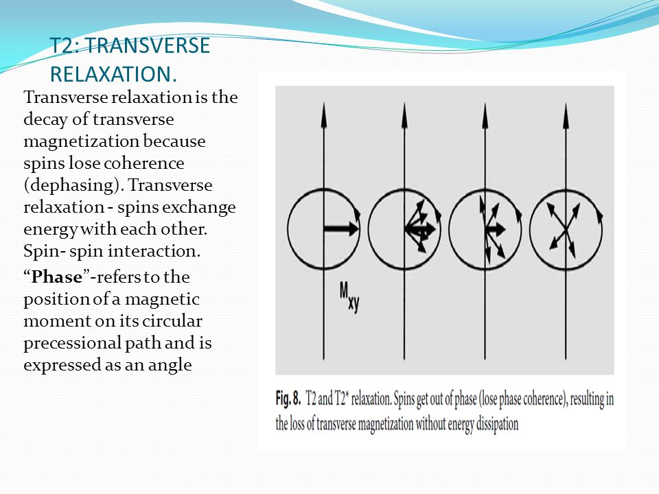 T2: TRANSVERSE RELAXATION. Transverse relaxation is the decay of transverse magnetization because spins lose coherence (dephasing). Transverse relaxat