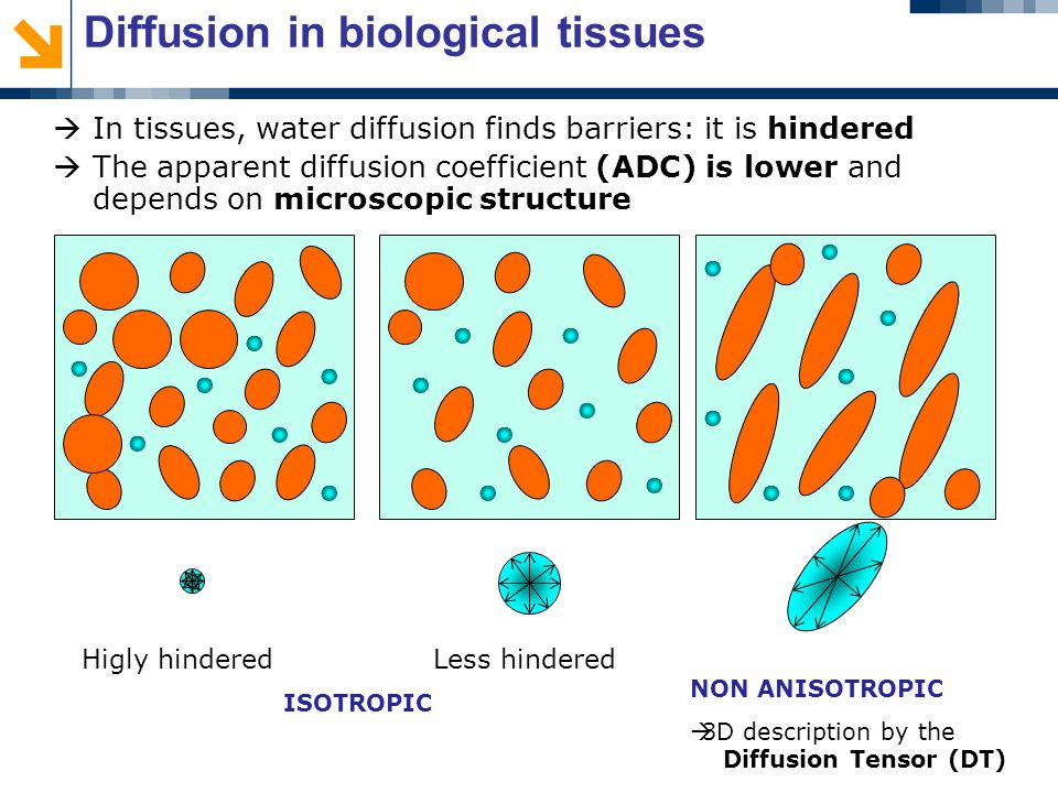 Diffusion in biological tissues  In tissues, water diffusion finds barriers: it is hindered  The apparent diffusion coefficient (ADC) is lower and depends on microscopic structure Higly hindered Less hindered ISOTROPIC NON ANISOTROPIC  3D description by the Diffusion Tensor (DT)