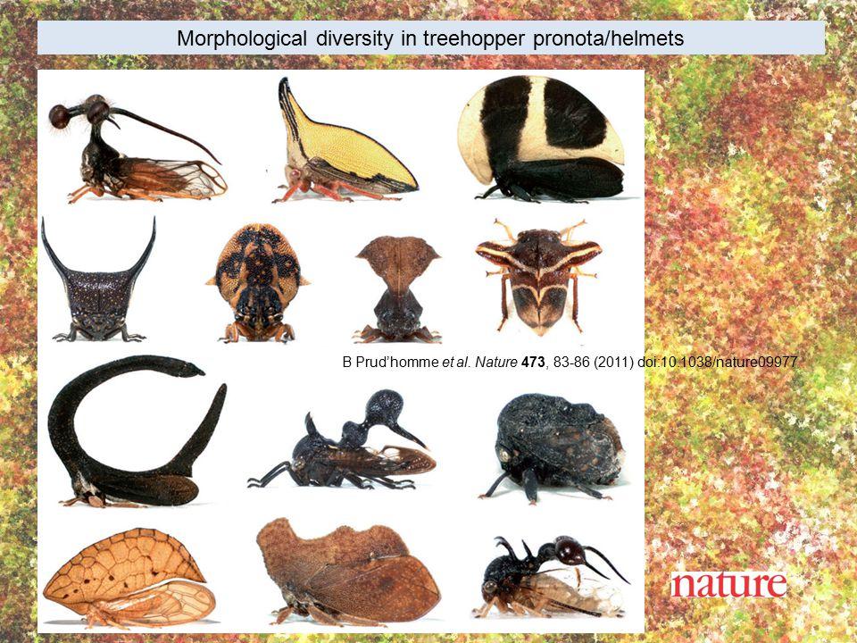 B Prud'homme et al. Nature 473, 83-86 (2011) doi:10.1038/nature09977 Morphological diversity in treehopper pronota/helmets