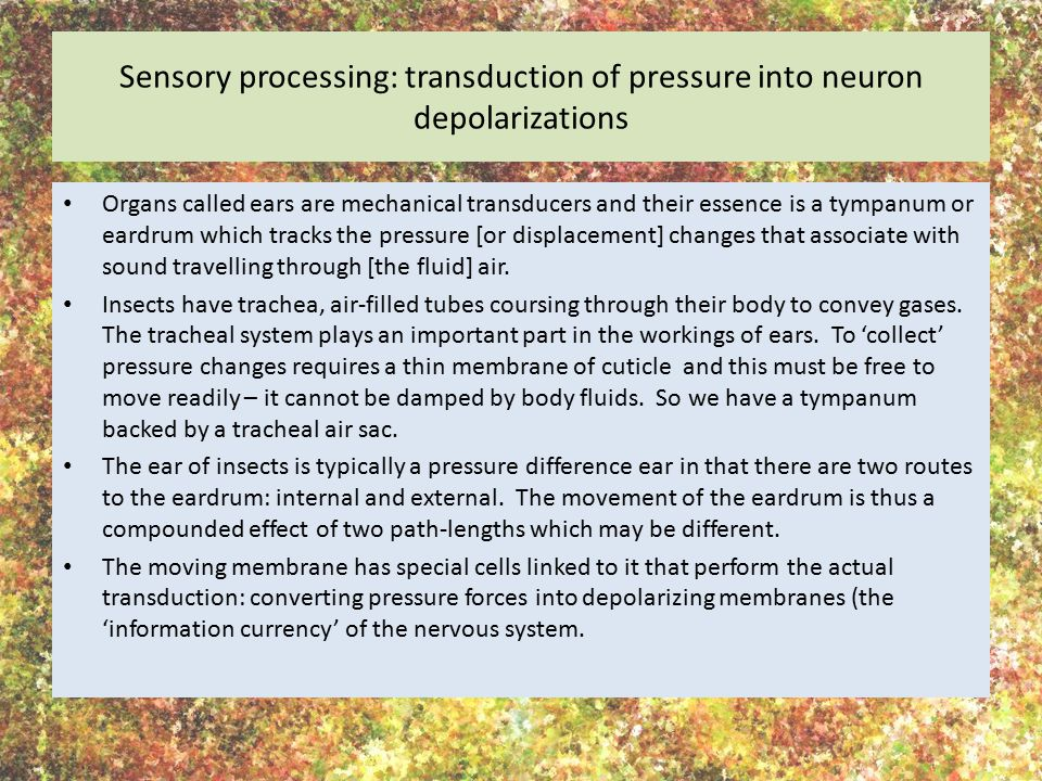 Sensory processing: transduction of pressure into neuron depolarizations Organs called ears are mechanical transducers and their essence is a tympanum