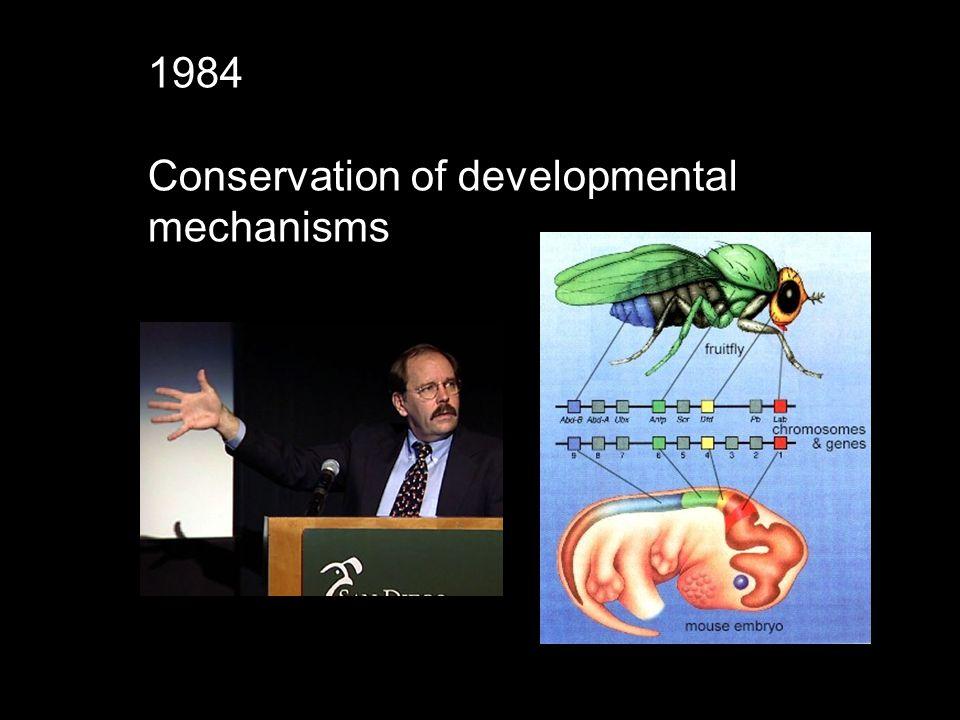 1984 Conservation of developmental mechanisms