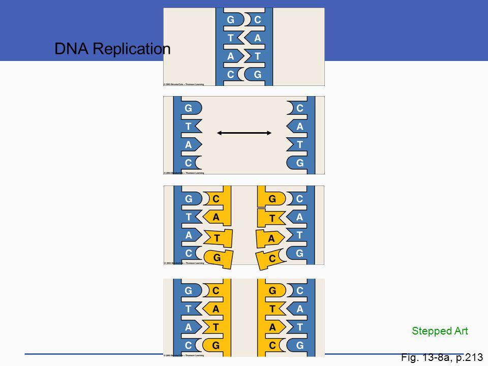 DNA Replication Fig. 13-8a, p.213 Stepped Art